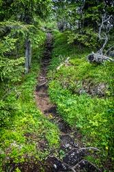Footpath in coniferous forest, Sina peak, Demanovska valley, Low Tatras mountains, Slovak republic. Hiking theme.