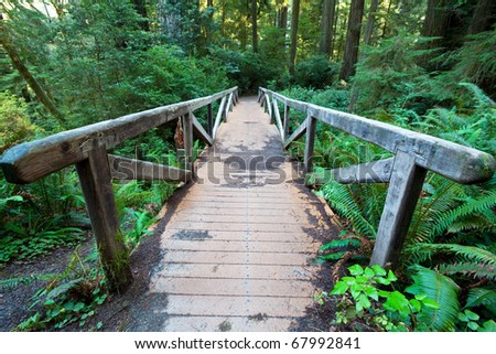 footpath in redwood forest