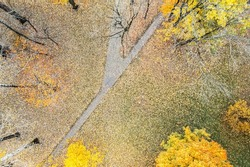 footpath in the autumn park. forest ground covered with colorful dry foliage. aerial top view.