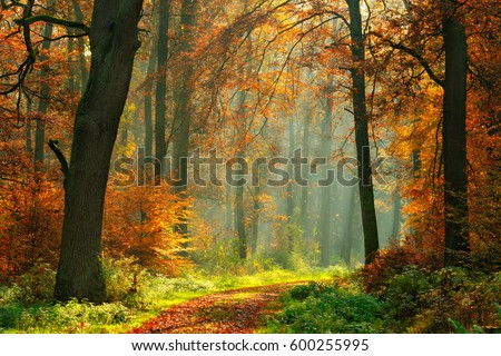 Footpath through Foggy Forest in Autumn illuminated by Sunbeams