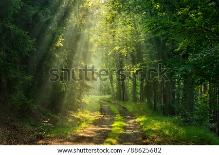 Footpath through Forestilluminated by Sunbeams through Fog