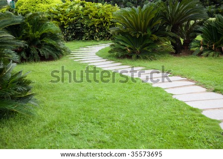 Footpath through shrubs in the garden