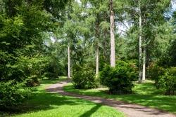 Footpath through the trees Westonbirt arboretum