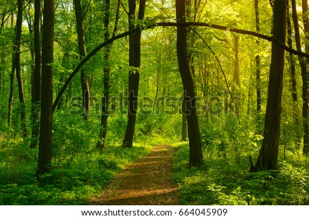 Footpath through Wild Natural Forest in the Beautiful Light of the Morning Sun - Shutterstock ID 664045909