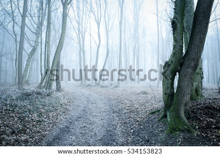 Footpath through Winter Forest of Beech Trees in Fog and Frost