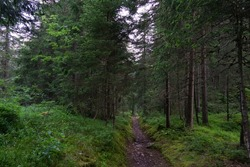 Footpath with rocks n the green woods. Way forward into the forest