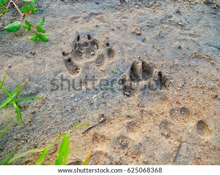 footprint Animal footprint #625068368