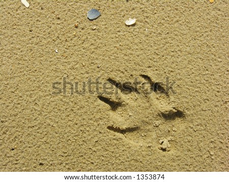 Footprint from Dog