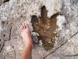 Footprint of a dinosaur with three toes. For the sake of comparison you see the photographer's foot.