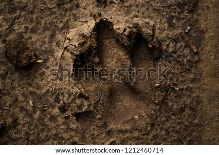 Footprint of an animal #1212460714