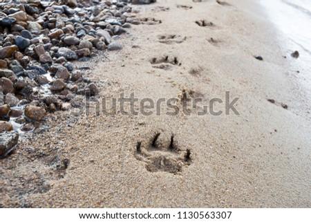 Footprint of an animal in the sand on the beach #1130563307