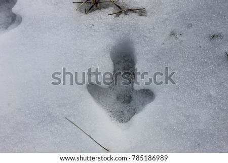 Footprint of an animal in the snow #785186989