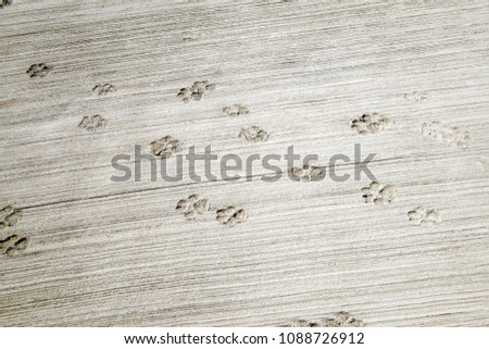 footprint of dog on the concrete rough floor  #1088726912