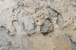 Footprint or imprint shoe in the mud.Mud texture or wet brown soil as natural organic clay and geological sediment mixture as in roughing it in a dirty muddy country ground after the rain or rainy.