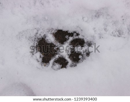 footprint the animal #1239393400