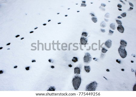 Footprints and animal tracks on snow, mountainous Messinia, Peloponnese, Greece. #775449256