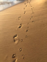 Footprints and pawprints in the sand. Man's best friend.
