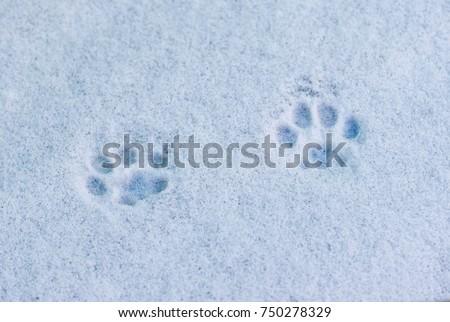 Shutterstock footprints cat in the snow