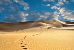 Footprints in the desert or beach sand
