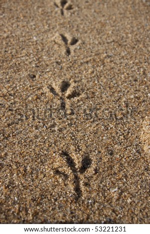 footprints in the sand of a bird