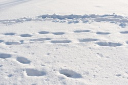 footprints in the snow, human footprints in the snow