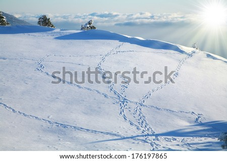 Footprints in the snow, reaching to the horizon above the clouds.