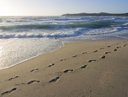 footprints of a person in the wet sand of a beach