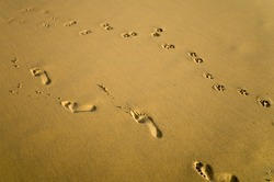 Footprints of a Woman and a Dog on the Sand
