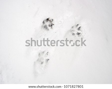 Footprints of an animal in the snow. texture #1071827801