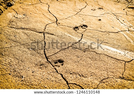 Footprints of animal on very dry and cracked desert ground, Hot summer day #1246110148