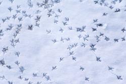 footprints of birds on snow