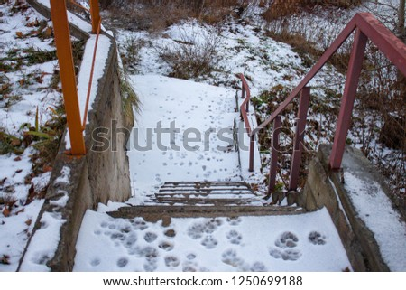 footprints of the animal in the snow, dog prints #1250699188