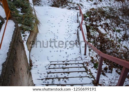 footprints of the animal in the snow, dog prints #1250699191