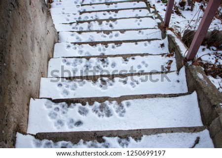 footprints of the animal in the snow, dog prints #1250699197
