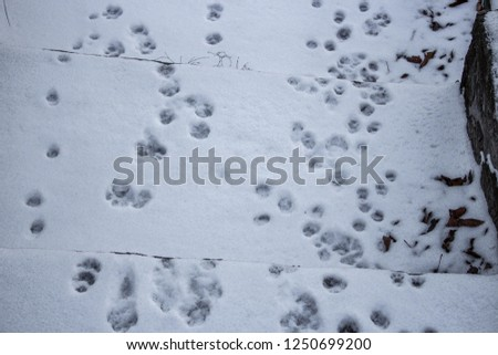 footprints of the animal in the snow, dog prints #1250699200