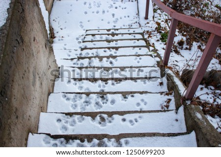 footprints of the animal in the snow, dog prints #1250699203