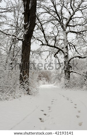 Footprints on forest path through snow