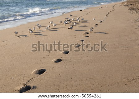 Footprints on the Beach with Seagulls.