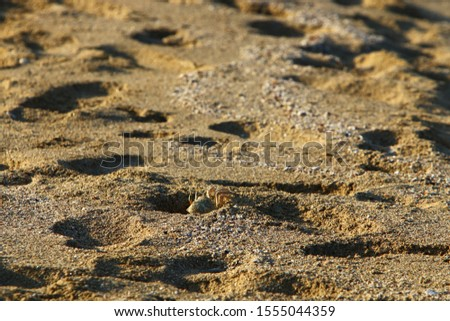footprints on the shores of the Mediterranean #1555044359