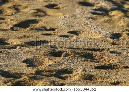 footprints on the shores of the Mediterranean #1555044362