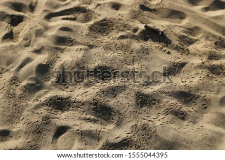 footprints on the shores of the Mediterranean #1555044395