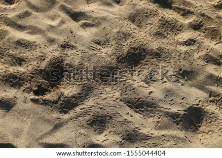 footprints on the shores of the Mediterranean #1555044404