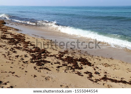 footprints on the shores of the Mediterranean #1555044554