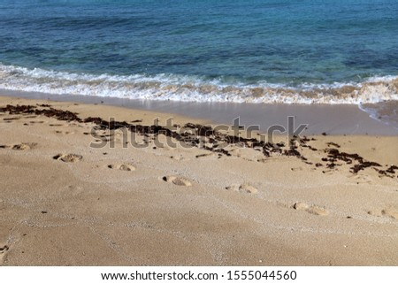 footprints on the shores of the Mediterranean #1555044560