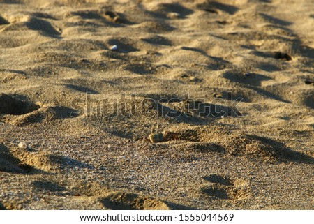footprints on the shores of the Mediterranean #1555044569