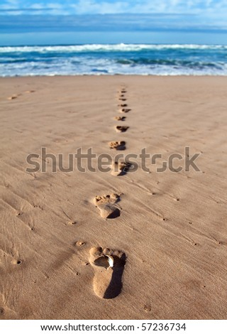Footprints with feather in wet sand in a line towards the sea and breakers