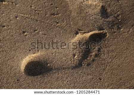 foots imprint in sand on the beach in summer #1205284471