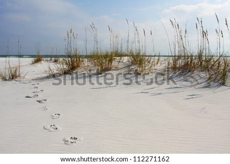 Footsteps along the White Sandy Dunes of Florida