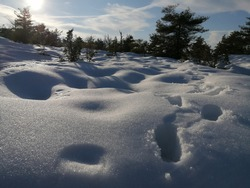 Footsteps in a wild snowy enviroment on a sunny day