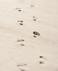 Footsteps in sand on a sunny day